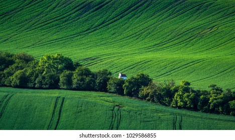 Green spring sown field abstract eco background. Summer hill amazing paysage wallpaper. South Moravia, Czech Republic