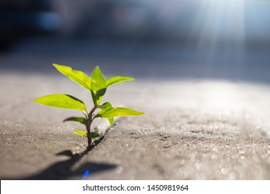 green sprout among concrete grew and stretches to the sun