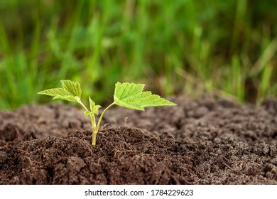A green sprout breaks out of the ground against the backdrop of greenery. Business concept, new beginning, new life. Copy space