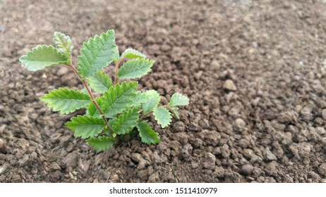 green sprout breaks through the ground