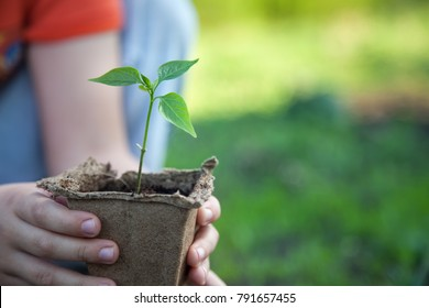 Green Sprout and Children Hands