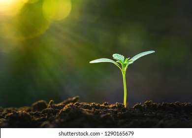 green sprout growing in garden with sunshine