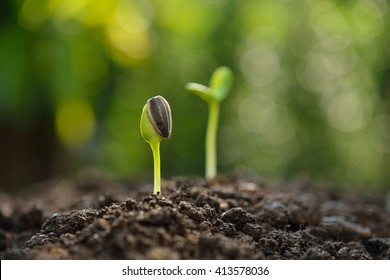 Green sprout growing from seed sitting on soil