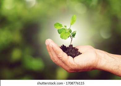 Green sprout growing from the soil in human hand