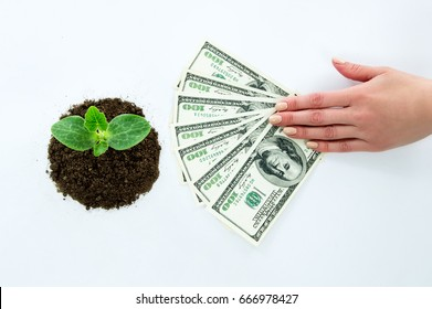 Green sprout, hands holding money dollars
