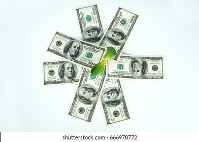 Green sprout, money dollars