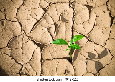 Green sprout on barren soil concept