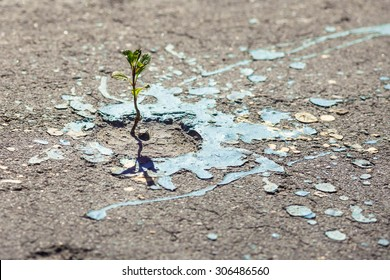 The green sprout of a plant makes the way through asphalt