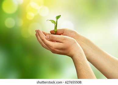 Green sprout plants in the hands of a young man on green background