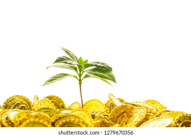 green sprout seed and gold coins.
