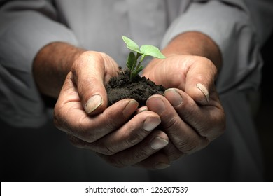 green sprout in senior man hand