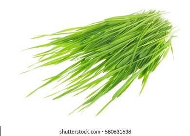 Green sprout of wheat and rye. Isolated on white background