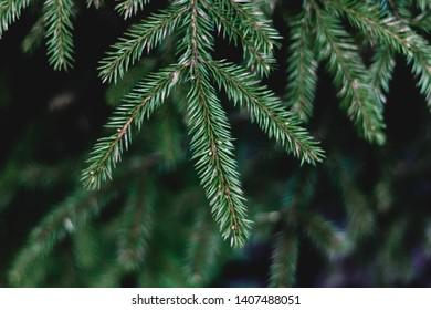 Tannenbaum Bilder.Bilder Stockfotos Und Vektorgrafiken Tannenbaum Shutterstock