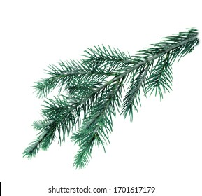 A green spruce branch on a white background . Texture or background.