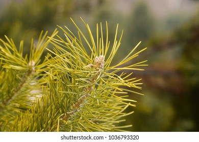 Green spruce in the forest, Background & Textures