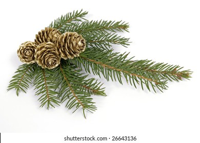 Green, spruce twig with around four golden cones