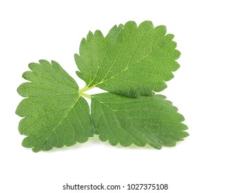 green strawberry leaf isolated on white background