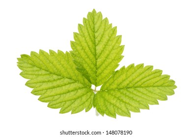Green strawberry leaf, isolated on a white background