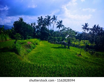 Green Stretch And The Blue Sky In Rice Fields At Ringdikit Village, Buleleng, North Bali, Indonesia
