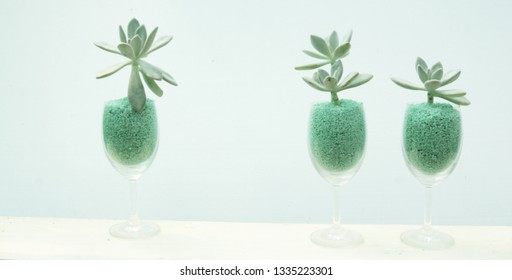 Green succulent in grass with background light green