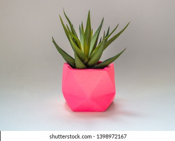Green succulent plant in fresh pink geometric concrete planter isolated on white background. Colorful painted concrete pots for home decoration.