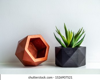 Green succulent plant in modern black and copper colors geometric concrete planters on white shelf isolated on white background. Beautiful painted concrete pots.