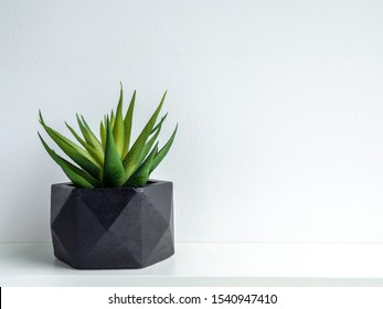 Green succulent plant in modern black geometric concrete planter isolated on white background with copy space. Beautiful painted concrete pot.