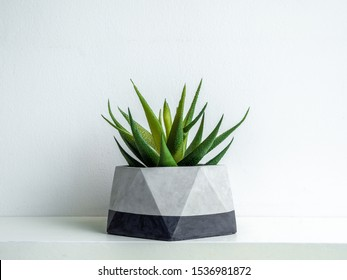 Green succulent plant in modern geometric concrete planter isolated on white background. Beautiful painted concrete pot.
