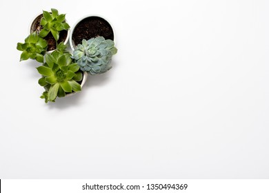 Green succulent plant on modern white office desk, top view
