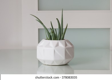 A green succulent, in a white, modern vase, sitting on a white, glass tabletop.