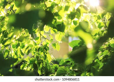 Green summer natural background. Sunny summer