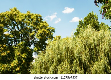 Green summer nature on sunny day. Summer background. Leaves on branchy trees.