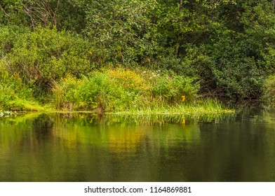 Green summer vegetation on the bank of Beaver Creek at the Ona Beach portion of Brian Booth State Park, Seal Rock, Oregon, with yellow and white flowers and reflection in the water.
