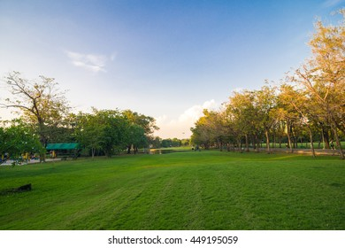Green summmer public park with tree branch, beautiful green lawns
