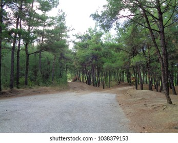 Green sunny forest landscape