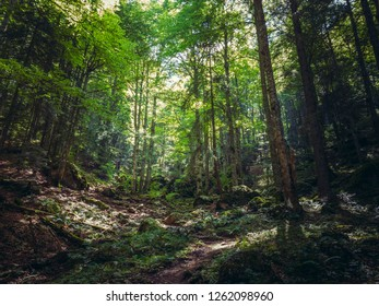Green sunny glade in a thick deciduous mountain forest.