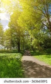 Green sunny spring scandinavian park with hiking trail, tranquil natural seasonal background
