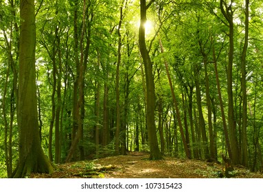 Green sunny summer forest with the sun shining behind a tree