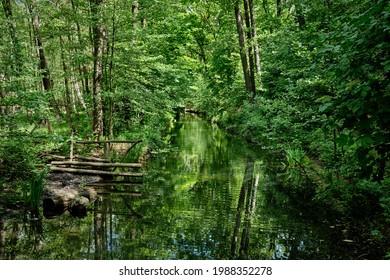 "Green swamp area: the ""Hundekehlegraben"" at the northern banks of Berlin ""Grunewaldsee"" (""Lake Grunewald"")"