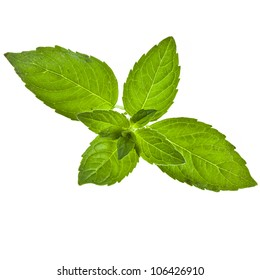 green sweet mint leaves isolated on white