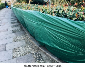 Green tarps tarpaulin used to cover dried border bush in winter in park in Qingdao China