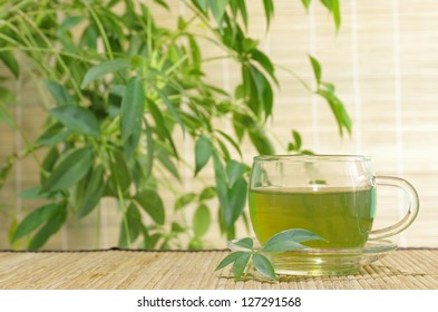 green tea in cup on plants' background