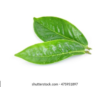 Green tea leaf with drops of water on white background.