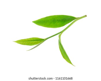 Green tea leaf isolated on white background