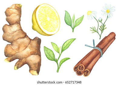 Green tea leaf and tea spices handdrawn illustration. Ginger root, lemon cut, chamomile, cinnamon watercolor painting on white background. Summer drink. Green tea clipart. Summer beverage ingredient