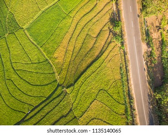 Green terrace rice field with line pattern and cross country road in Aerial Photography top view; Yogyakarta, Indonesia - 15 July 2018