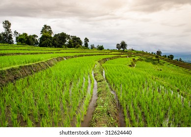 Green Terraced Fields with Cloudy