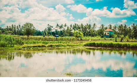 Green terraced rice field. Beautiful nature landscape background with blue sky. Ubud. Bali, Indonesia