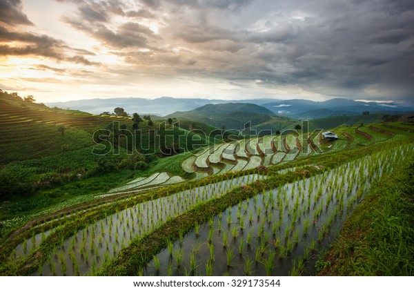 Green Terraced Rice Field in Chiangmai, Thailand, Vibrant color effect