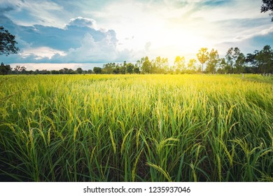 Green Terraced Rice field green grass blue sky cloud cloudy landscape background  in the evening and beam sunset in Asia countryside
